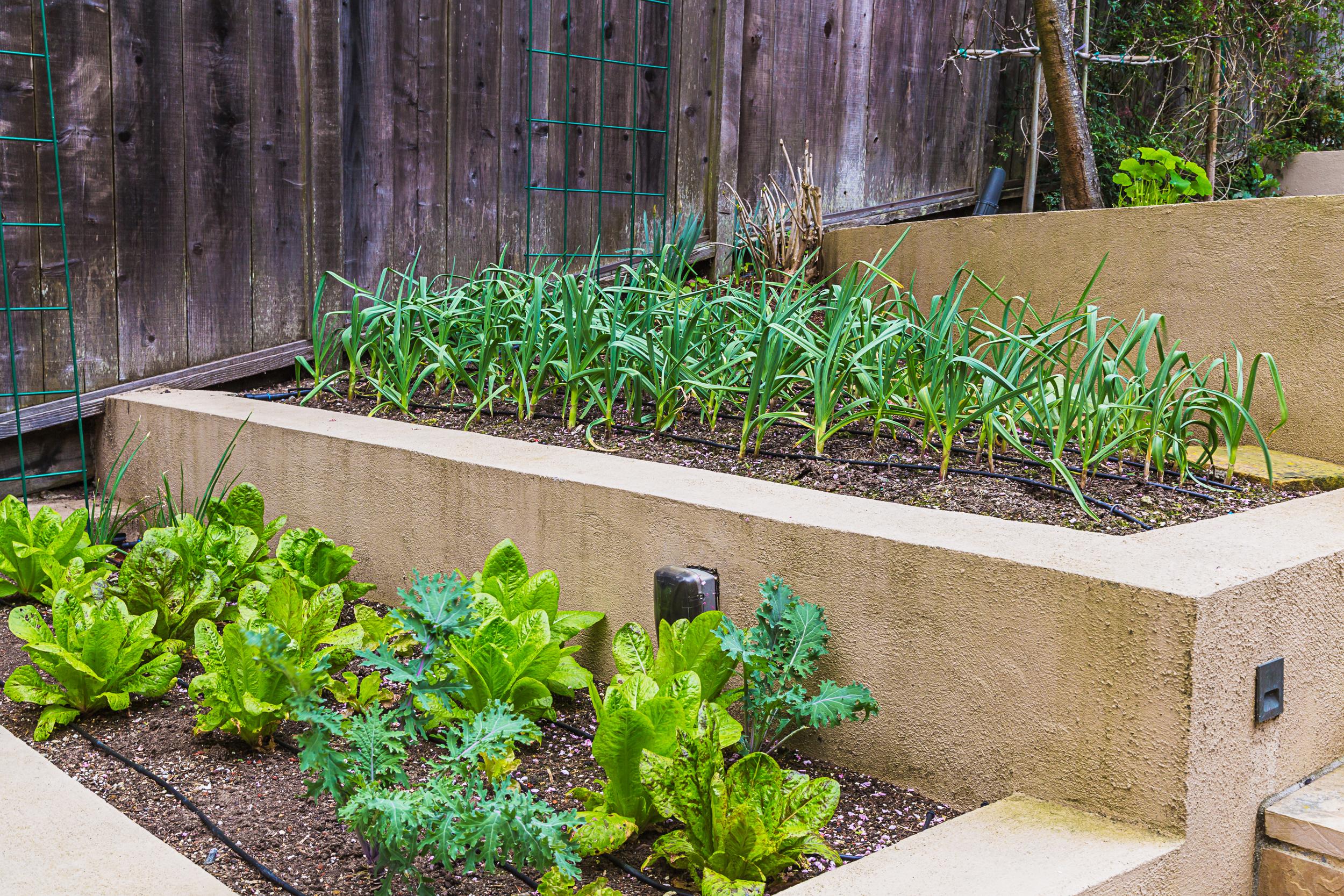 Edible Landscape Design Installation San Francisco Landscapes