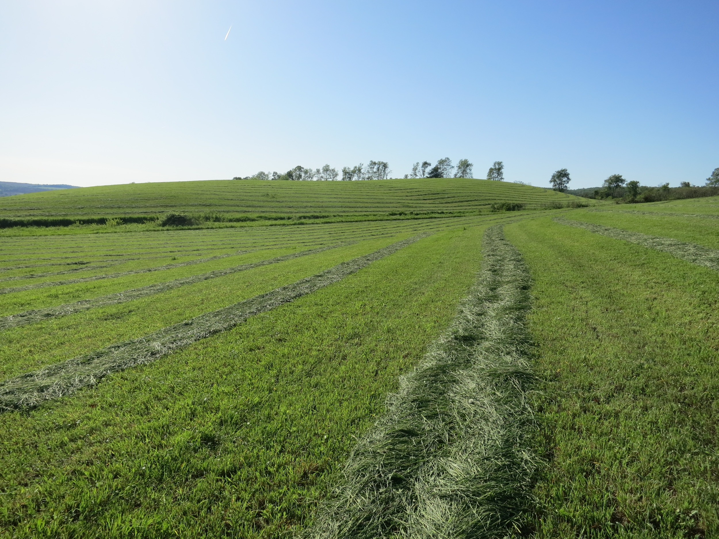 Summer hayed fields 3.JPG