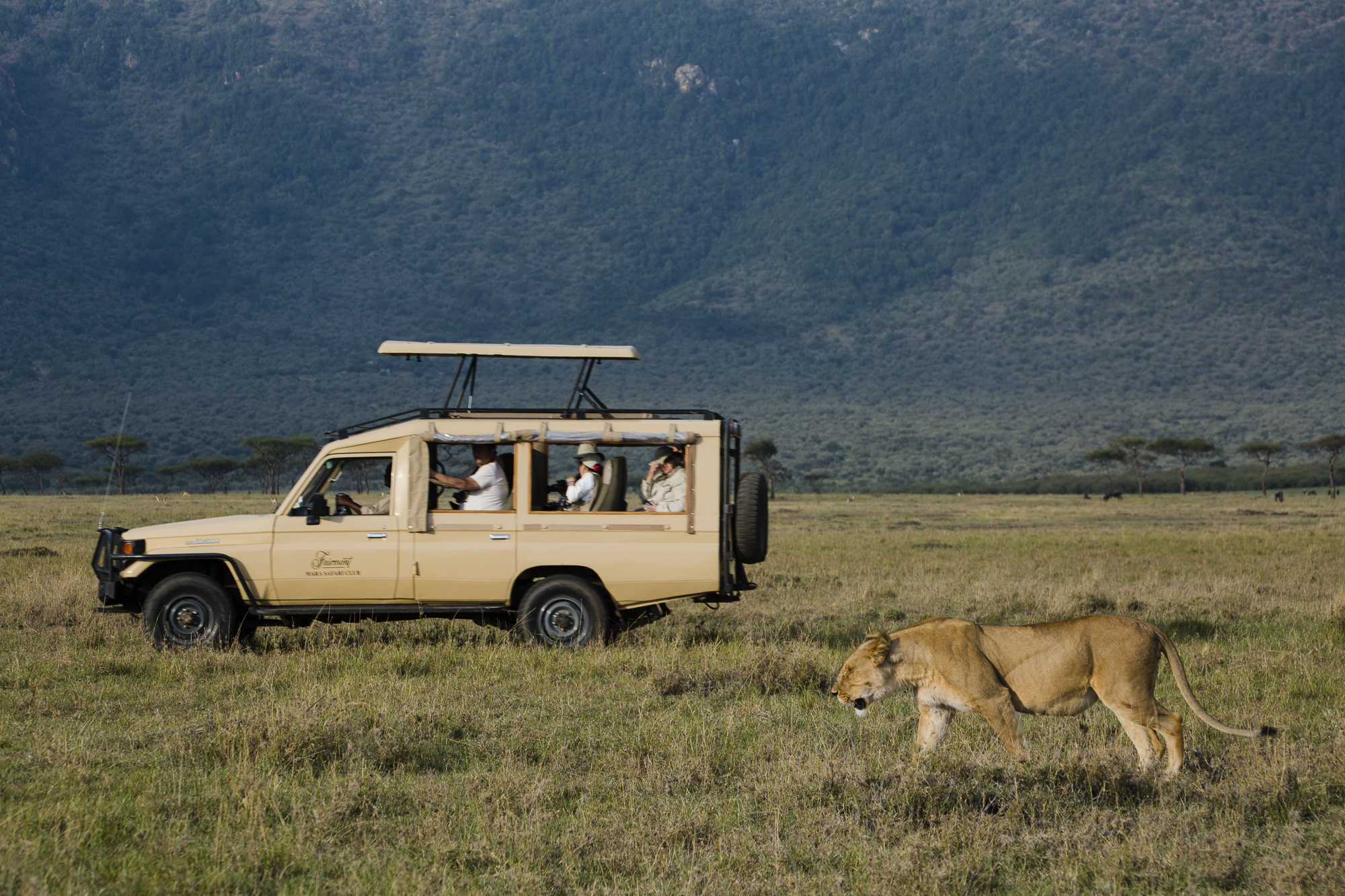 A lioness is followed by a safari tour vehicle in the Maasai Mara National Reserve in Kenya.