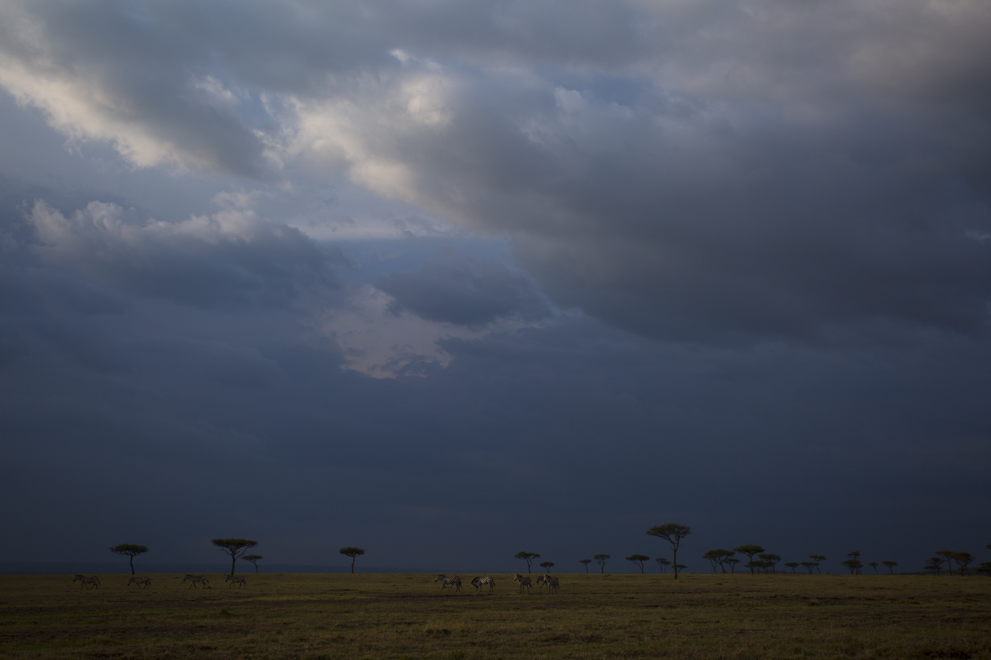 A view of the last rays of sunlight over Maasai Mara National Reserve in Kenya.