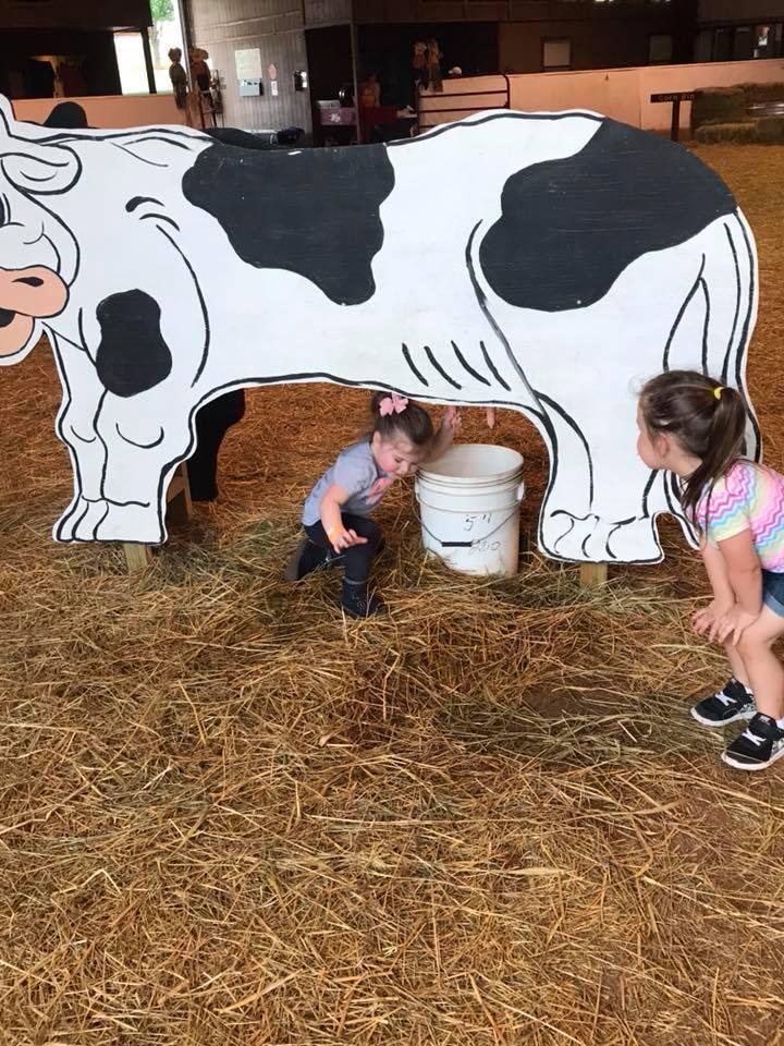 cow milking2.jpg