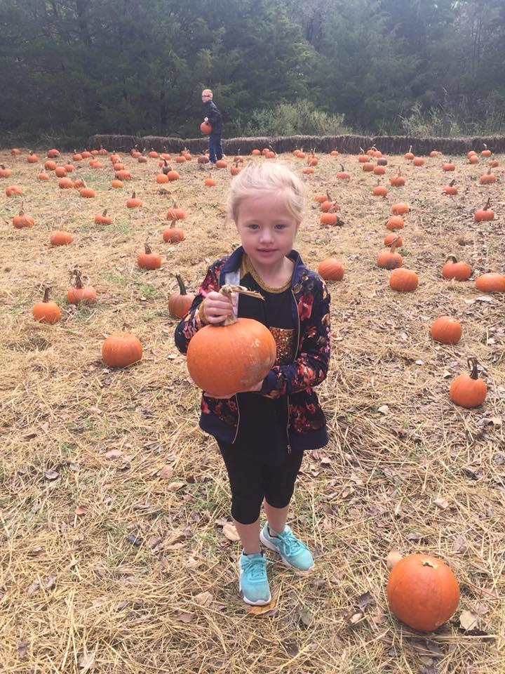 Pie Pumpkin Patch.jpg