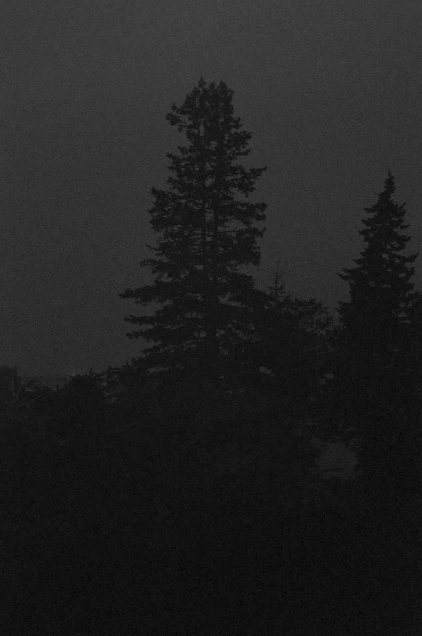 Midnight Spruce  2009-11