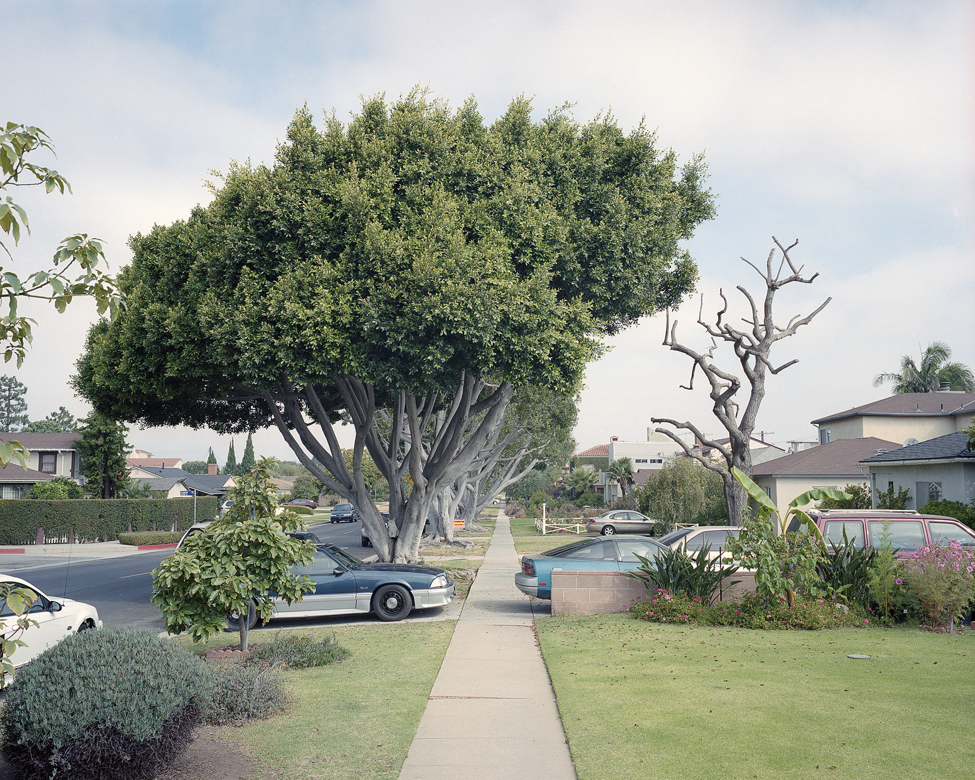 Cars and Trees.jpg