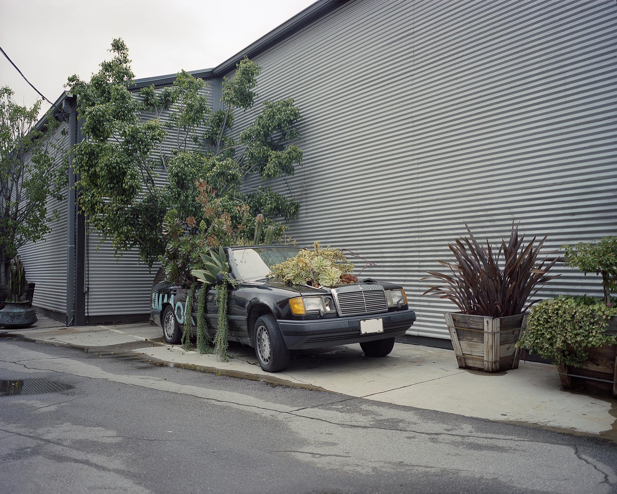 Mercedes Plants.jpg