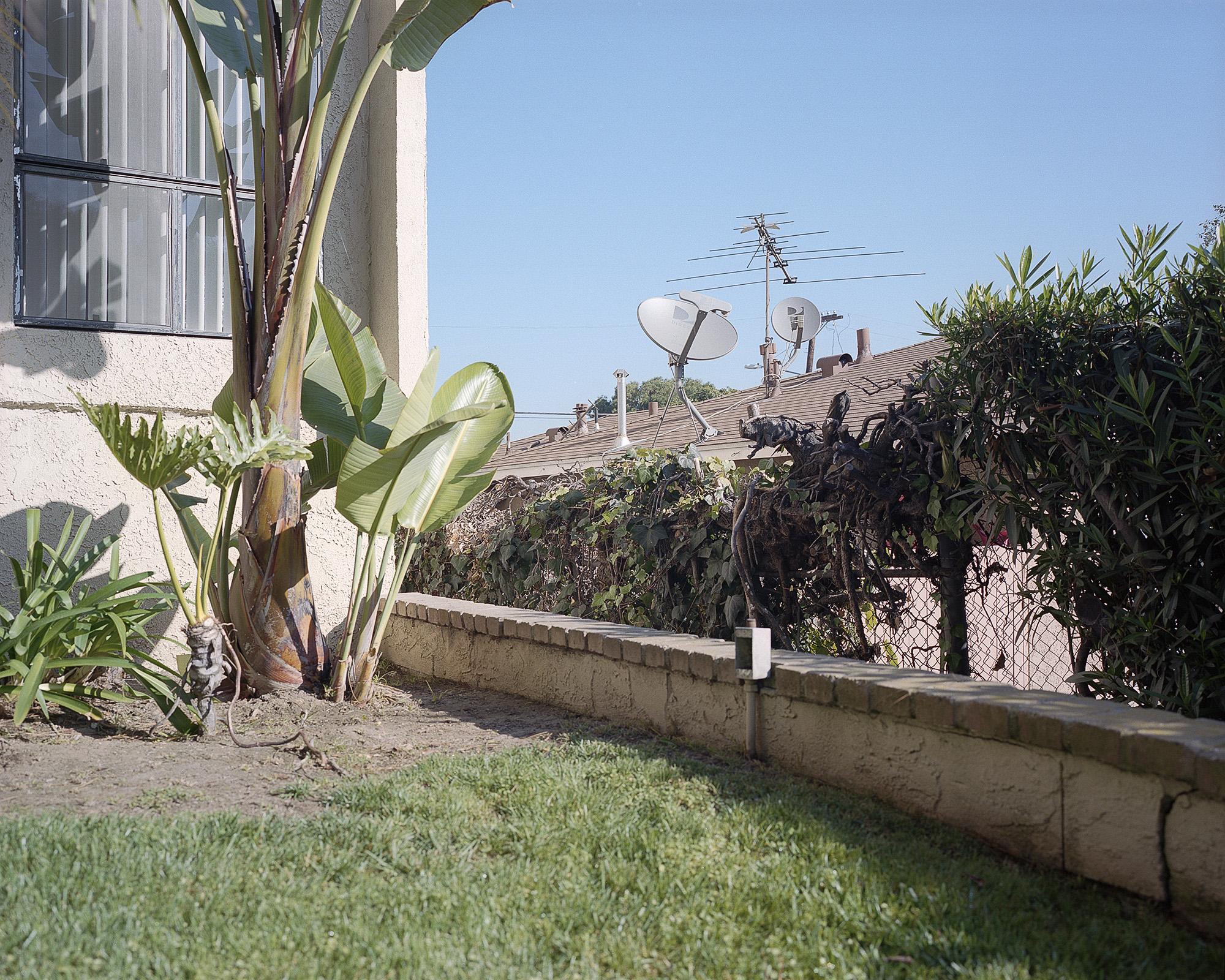 Plants Satellite Dish.jpg
