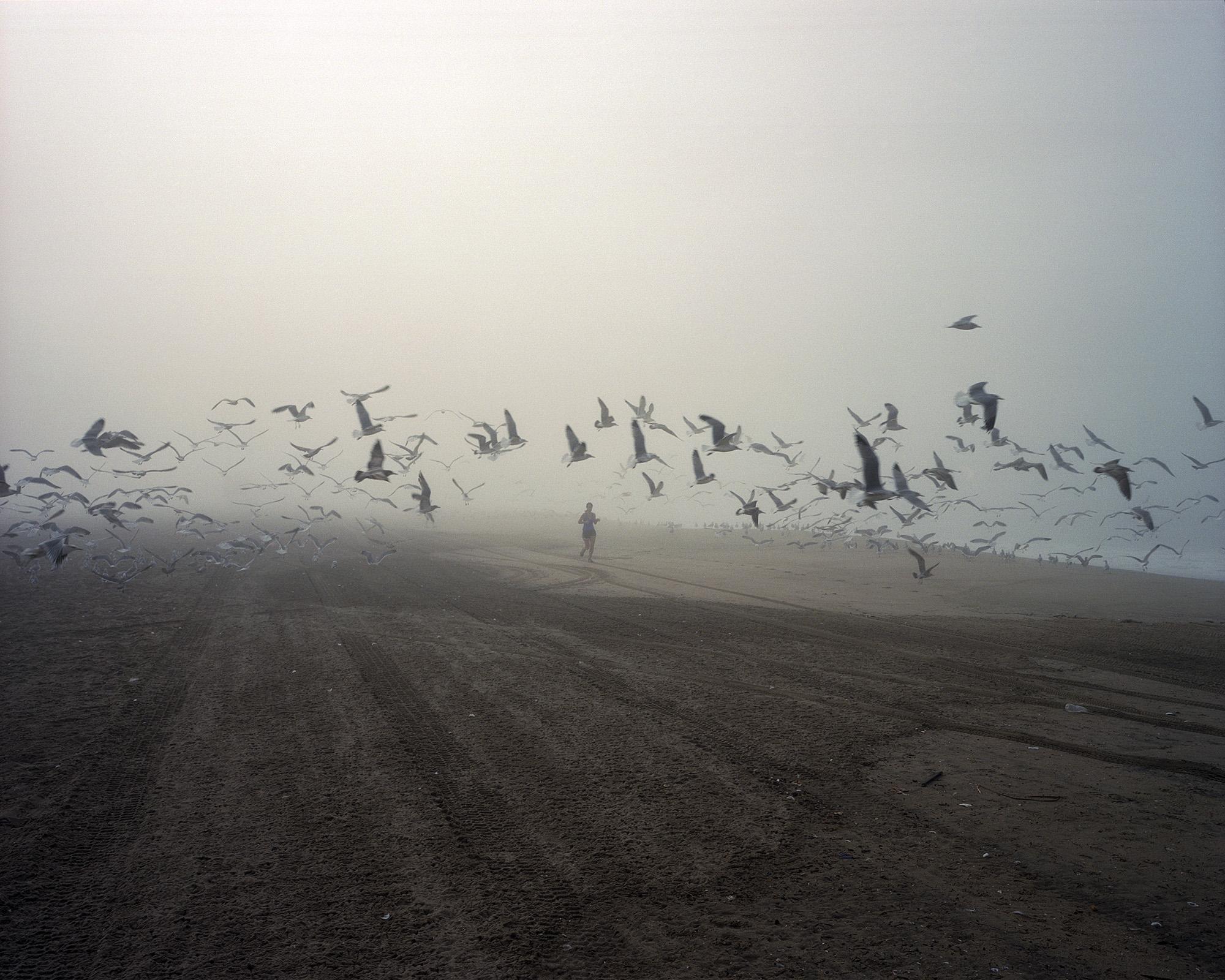 Jogger Seagulls.jpg