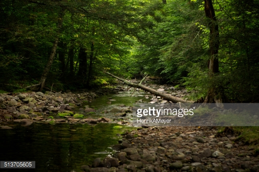 Photo by HenrikAMeyer/iStock / Getty Images