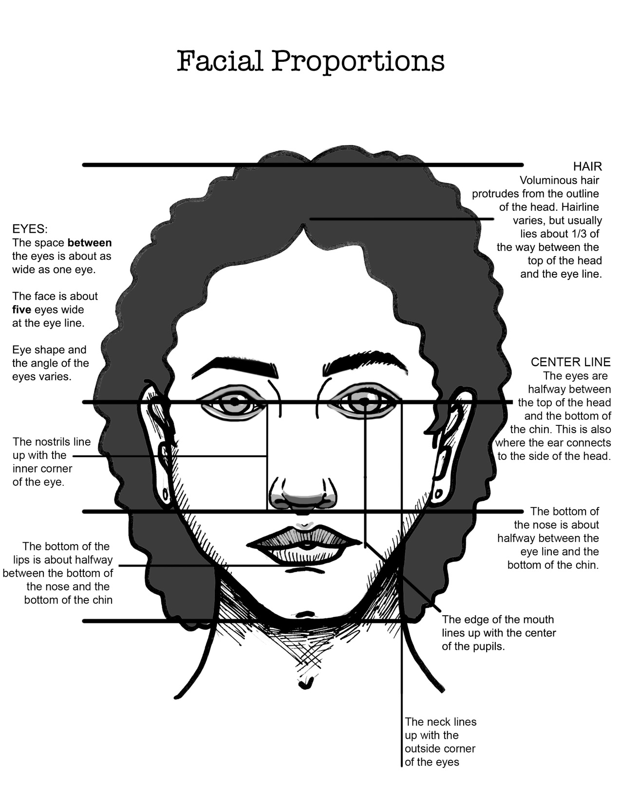 Facial Proportions3.jpg