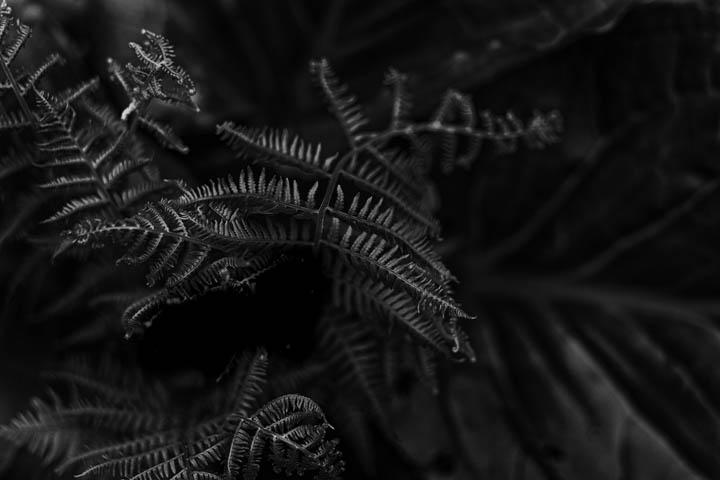 ferns (5 of 46).jpg