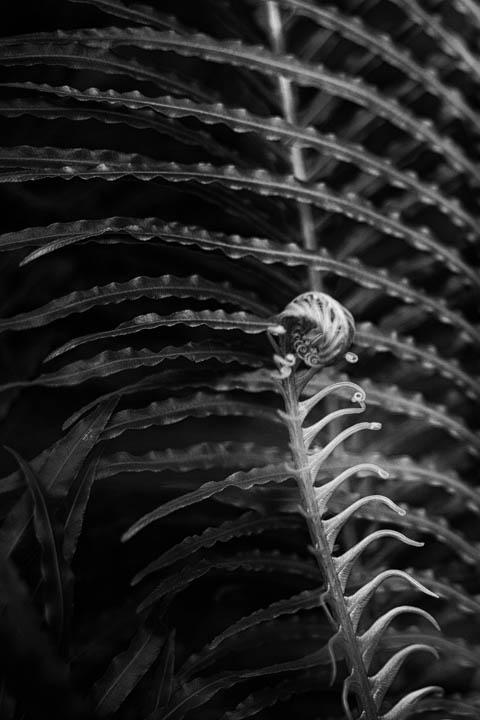 ferns (8 of 46).jpg