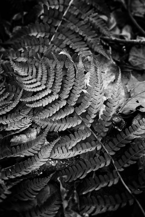 ferns (17 of 46).jpg