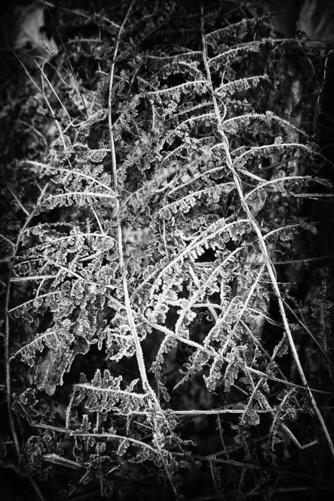 ferns (20 of 46).jpg
