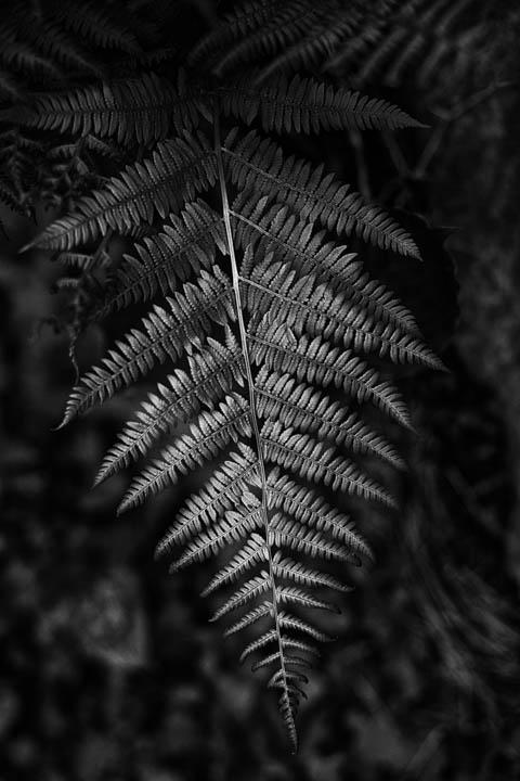 ferns (29 of 46).jpg