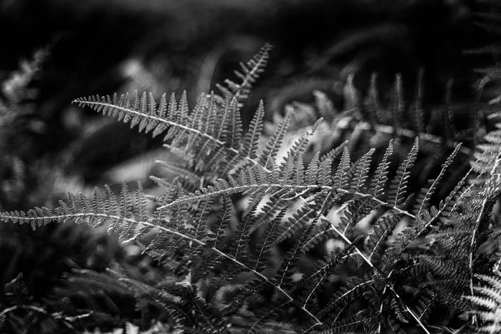 ferns (32 of 46).jpg