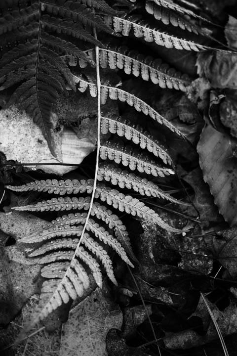 ferns (36 of 46).jpg