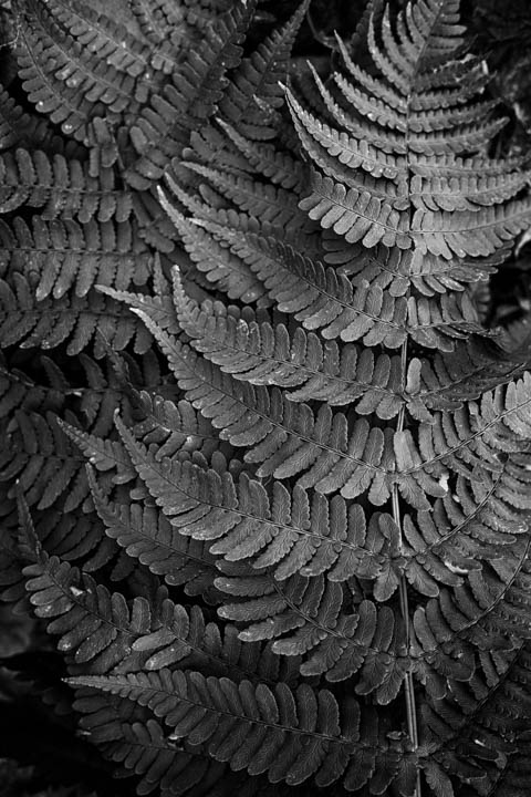 ferns (38 of 46).jpg