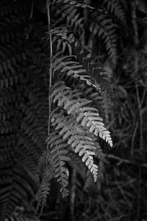 ferns (41 of 46).jpg