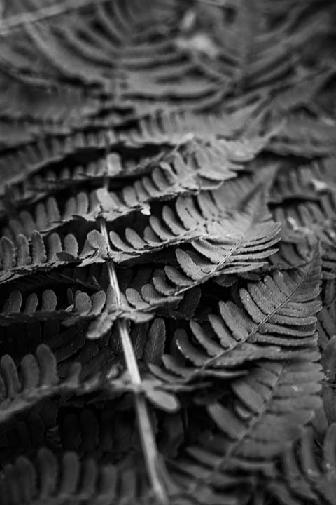 ferns (44 of 46).jpg