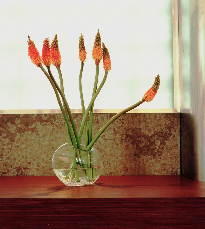 flower_closeup.jpg