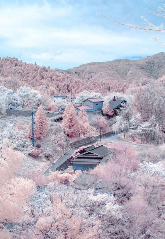 NaganoCherryBlossoms.jpg