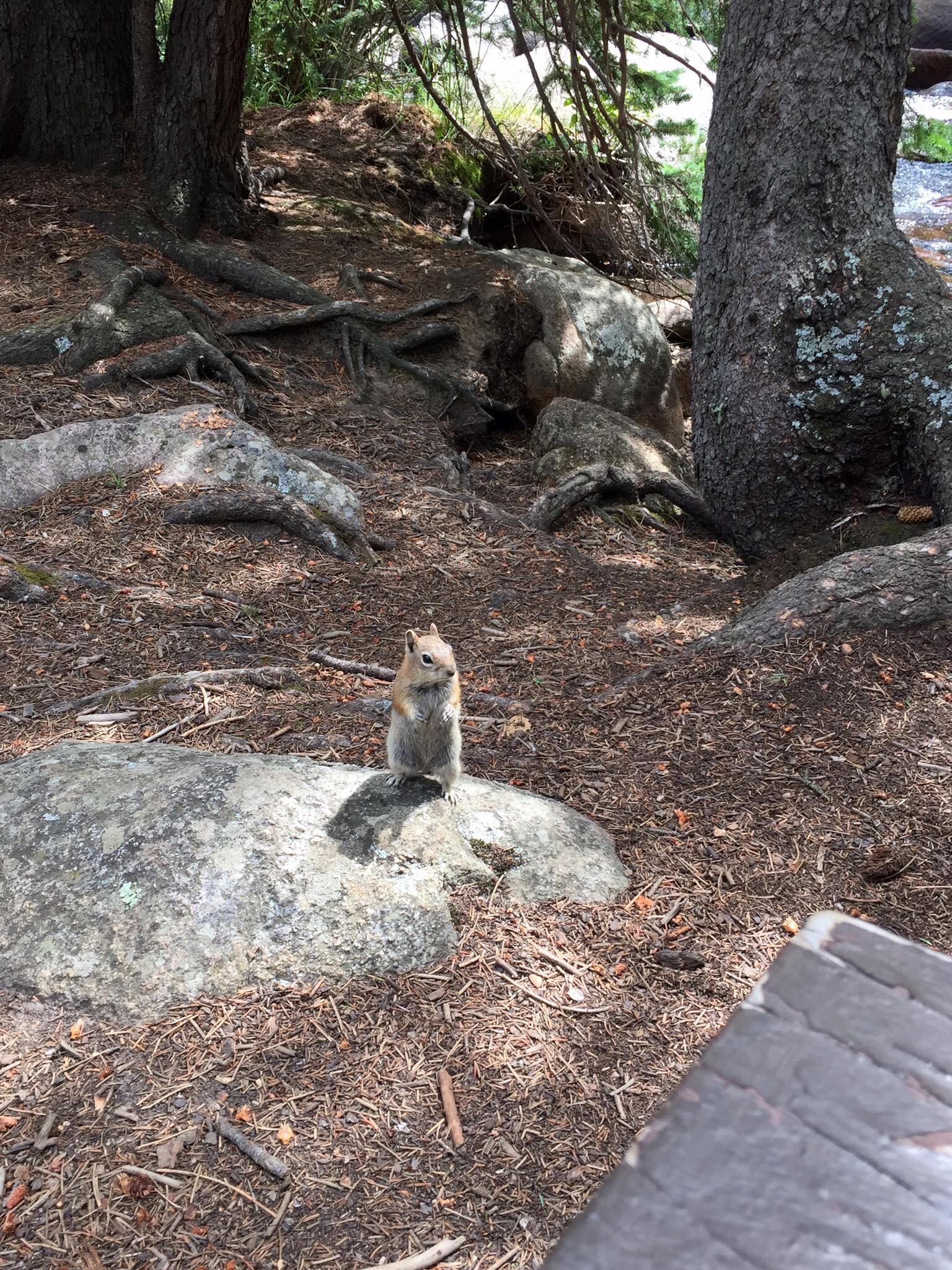 This little guy wanted all of our snacks. Sorry, but we can't feed you.