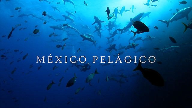 Image from the Pelagic Life Initiative