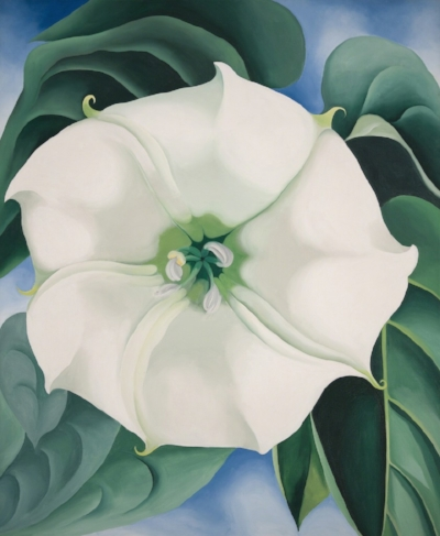 Georgia O'Keeffe   Jimson Weed, White Flower No. 1   1936