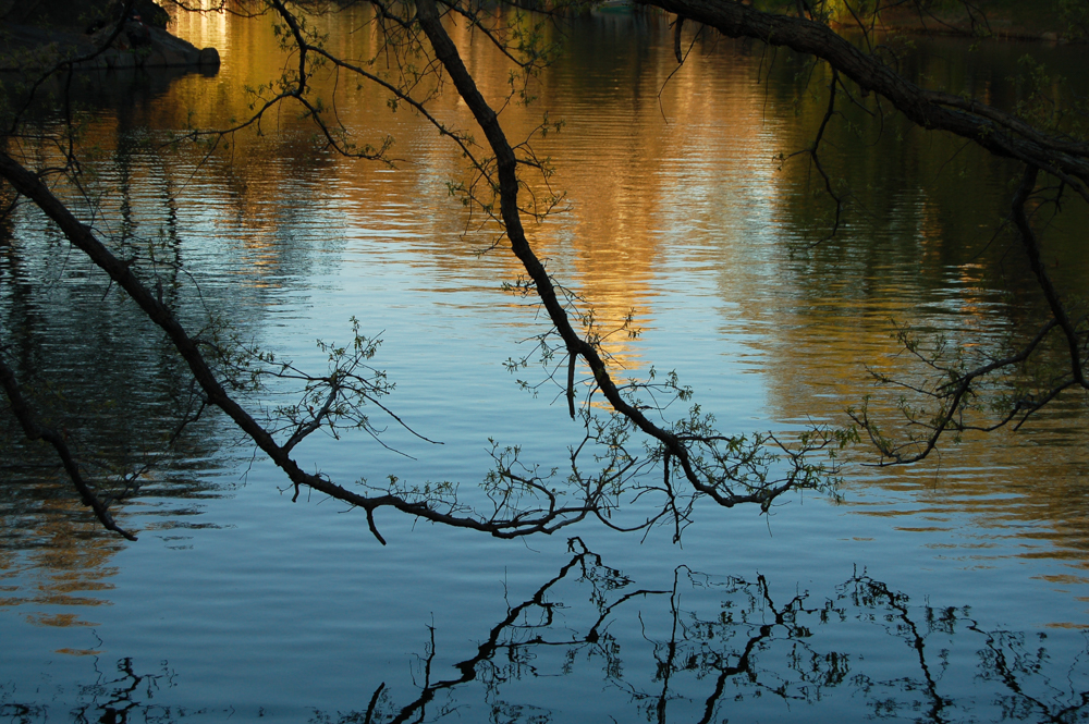 Pond Central Park.jpg