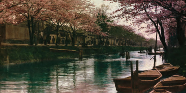 Cherry Trees in Japan  (Courtesy of the National Agricultural Library, Agricultural Research Service,  U. S.Department of Agriculture)