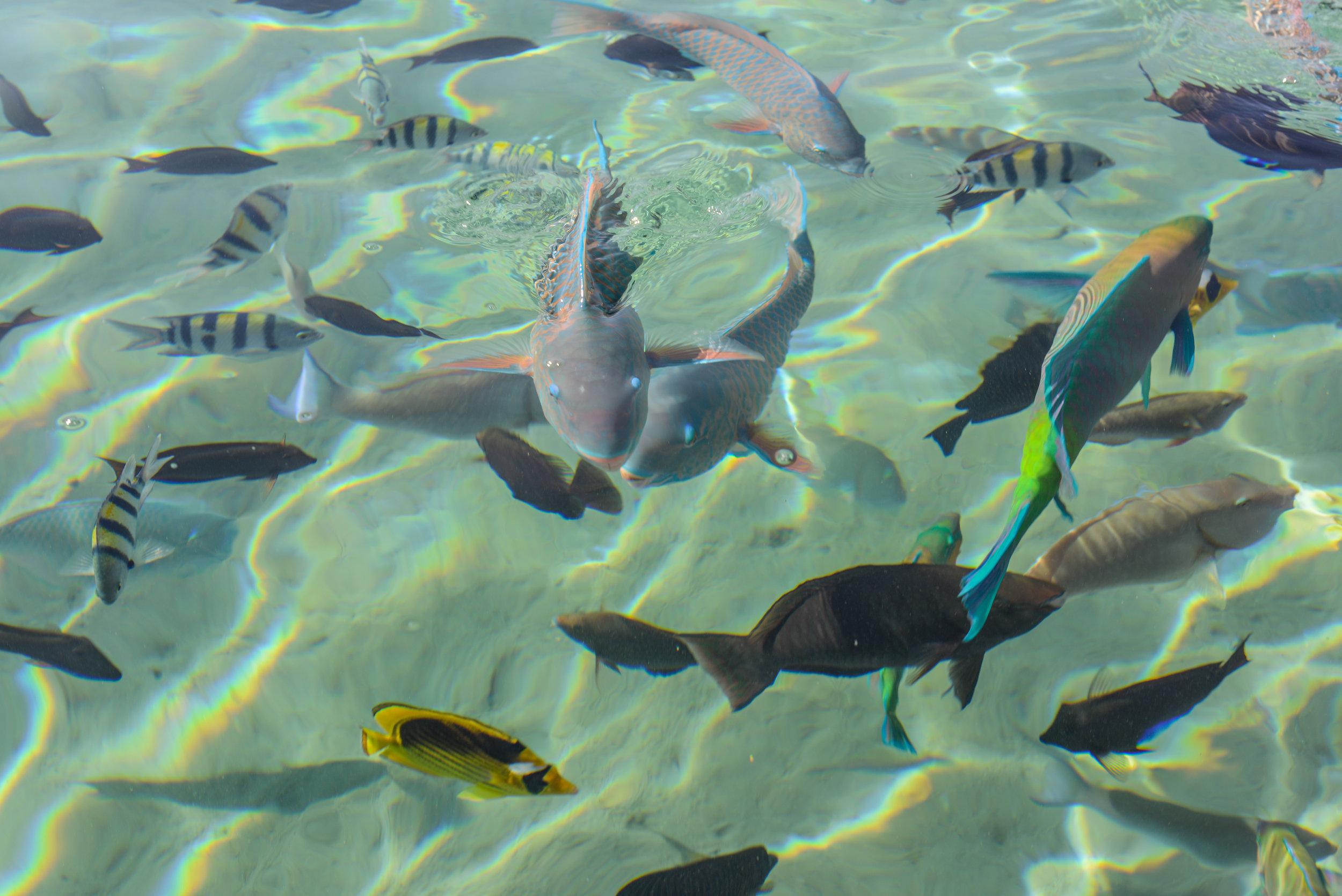 Fish, Fish_.jpg