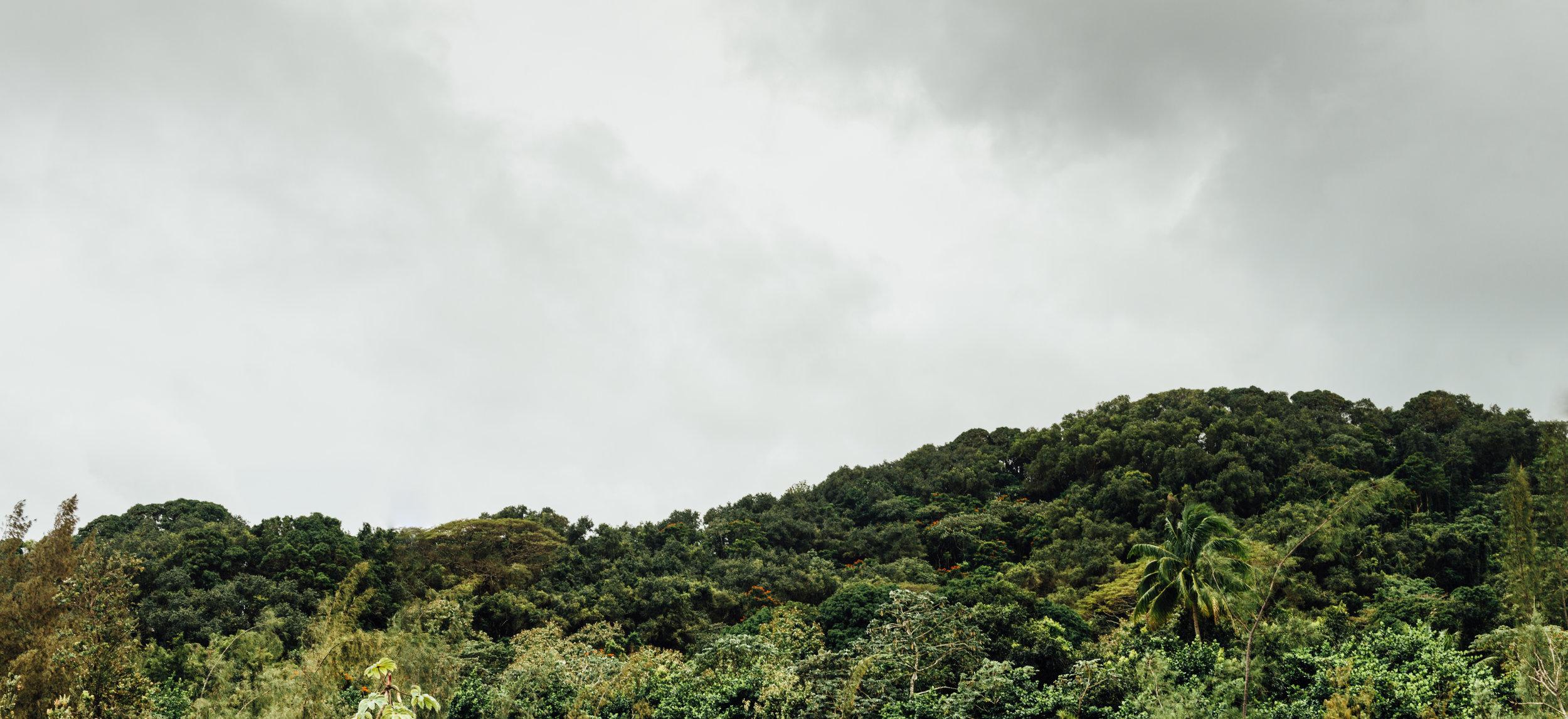 The Jungle_.jpg