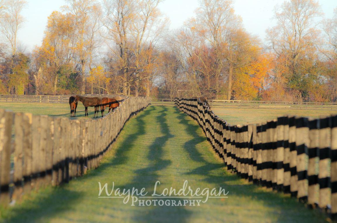 wayne londregan - photography sunday
