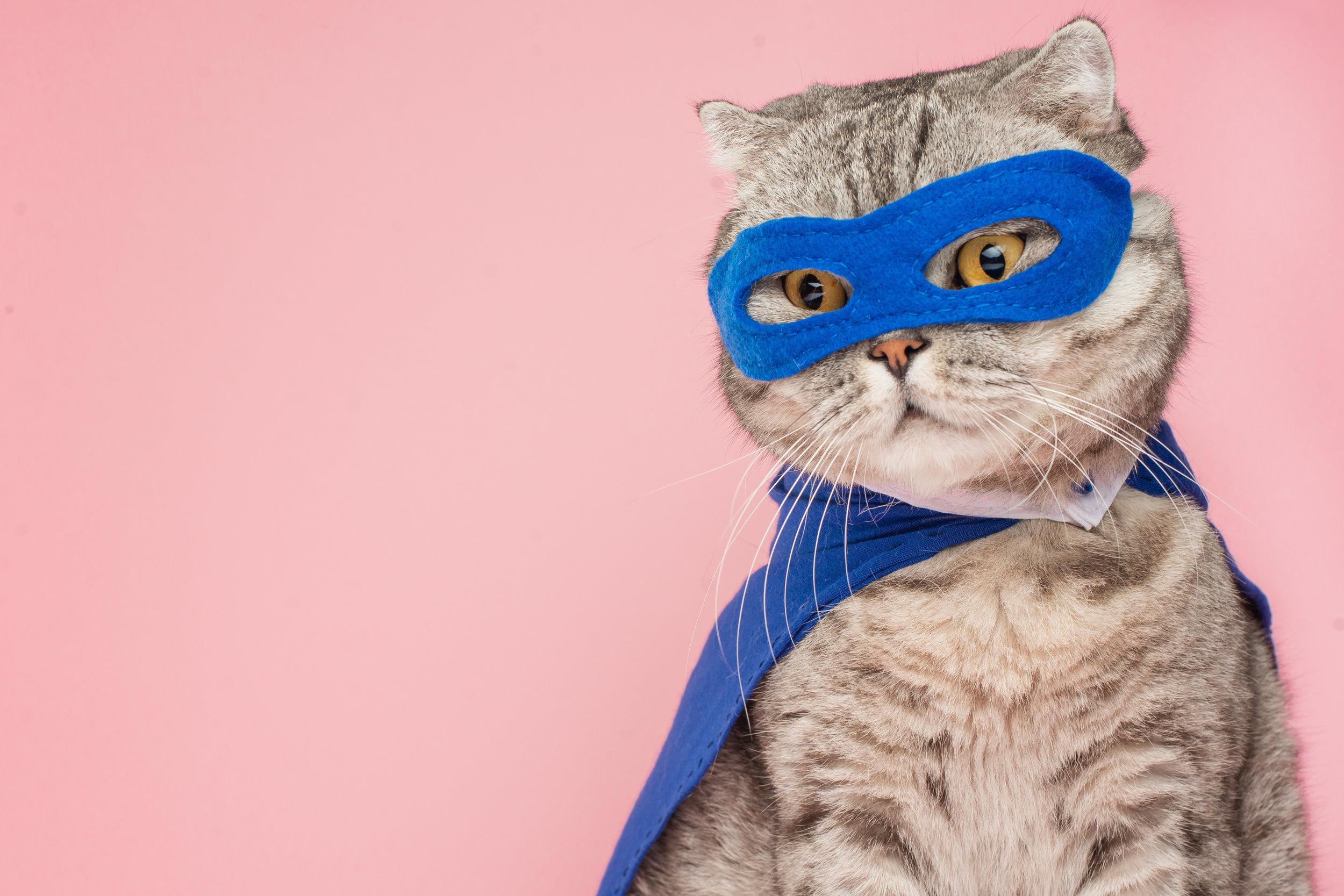 Resiliency Cat