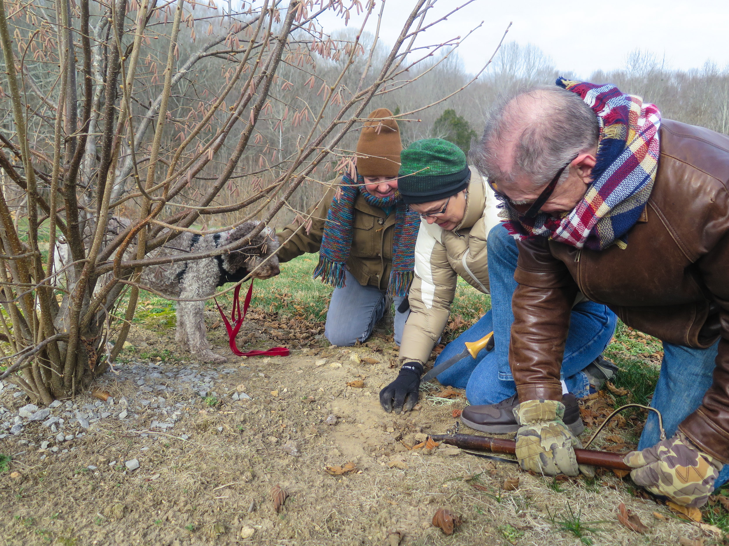 From left, Margaret Townsend, Lois Martin and Tom Michaels dug at a spot where the dog Monza sniffed out a native truffle.