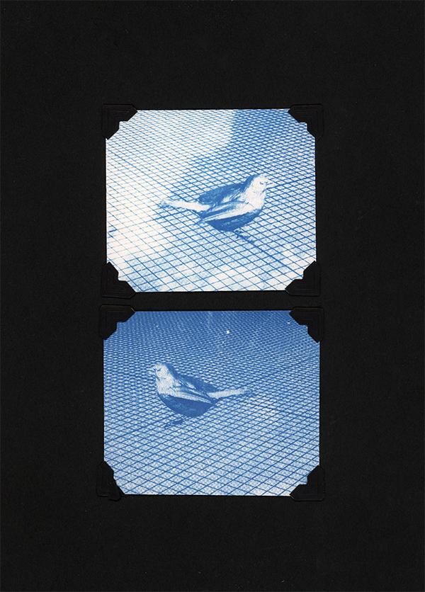 BIRD two 2 - small.jpg