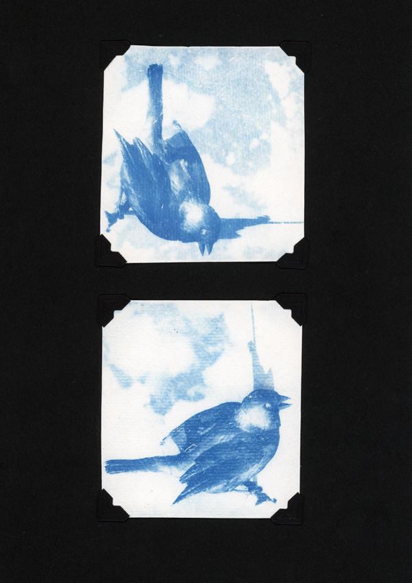 BIRD two - small.jpg