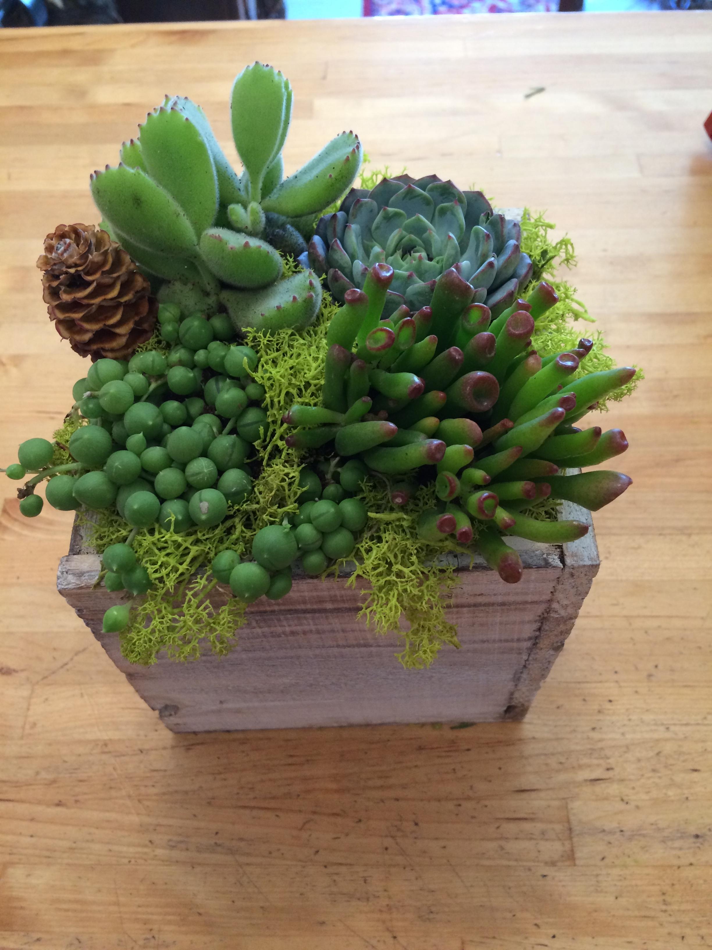 Gorgeous botanicals & plants available!