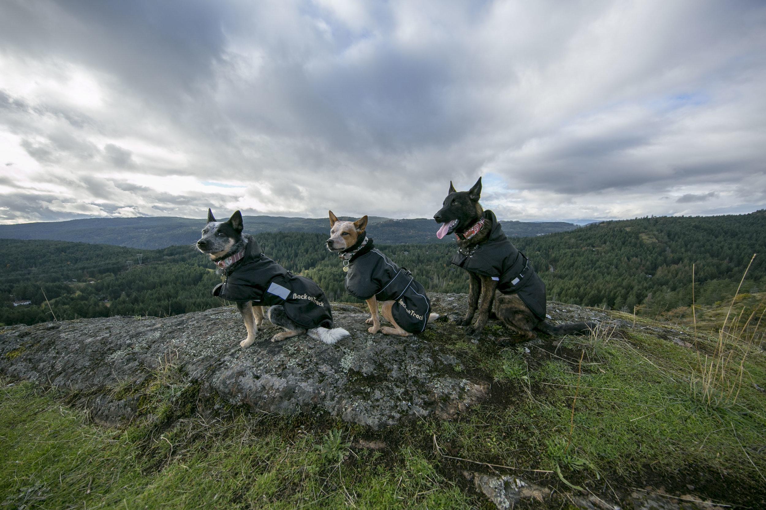 Right to left: Dog Rug, Whippet Rug, Multi-Season Rug