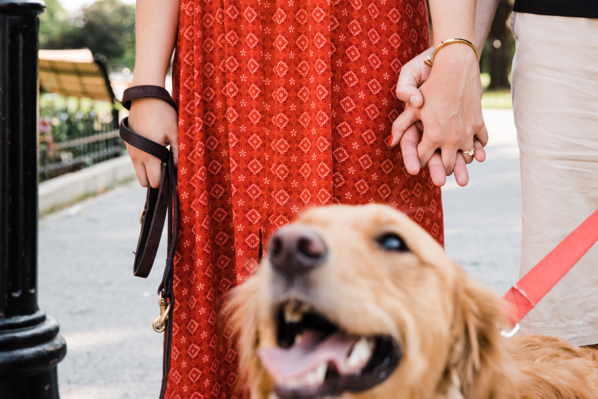 Top Engagement Photographs with Dogs in Maryland by Megapixels Media Photography.jpg