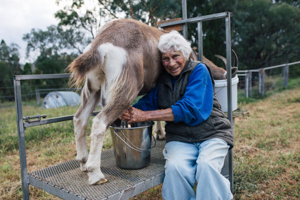 Our neighbour, Margaret & her goat Ettie provides the milk we use in our Goat's Milk Soaps.