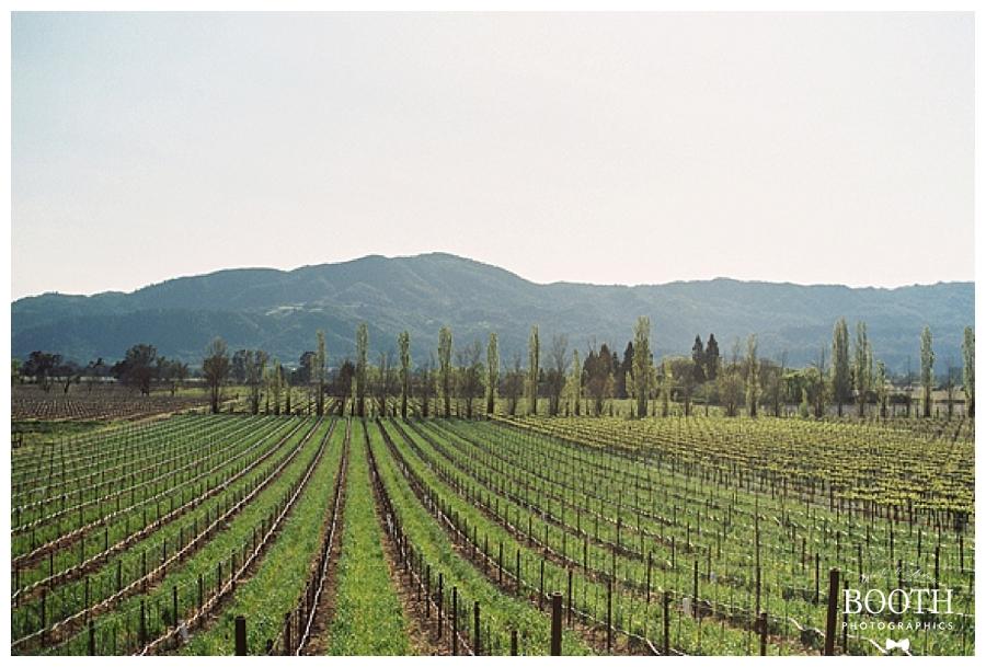 fine art California winery wedding photography