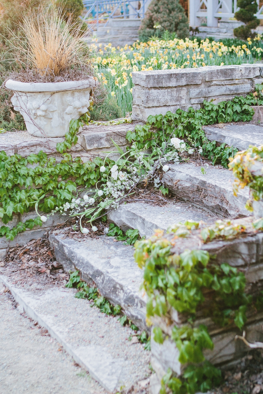ivy covered stone staircase in french gardens