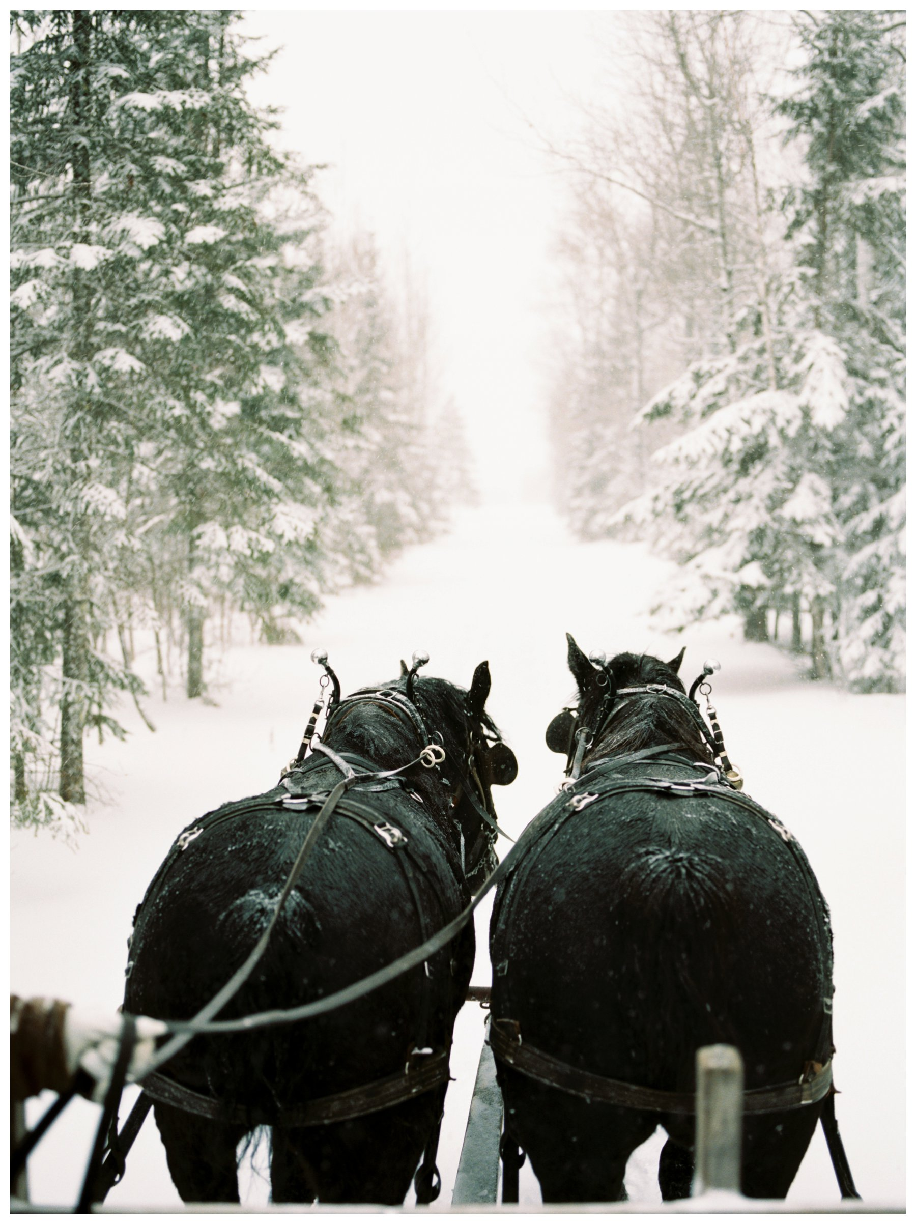 fine art travel photography of sleigh ride in northern Minnesota