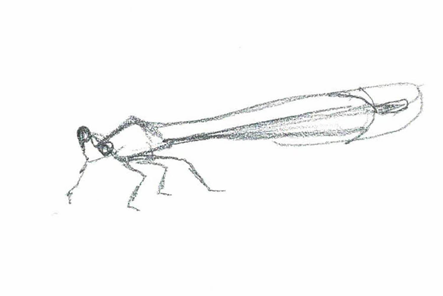 damselfly_small.jpg