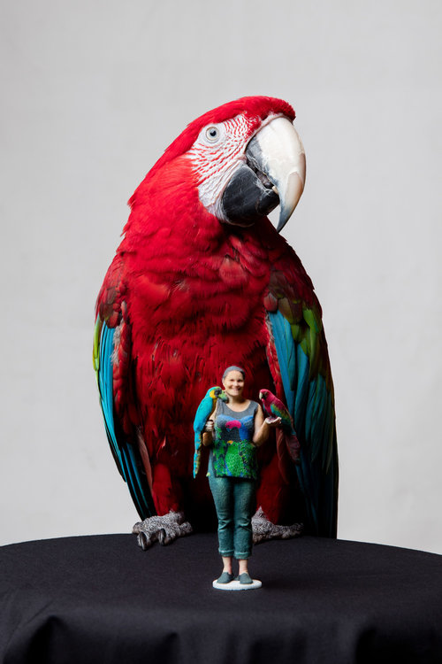 Normally, birds are always moving their heads, scanning for danger. These macaw's were hams, and held any pose. Look close, and you will see also a green parrot on her right shoulder.