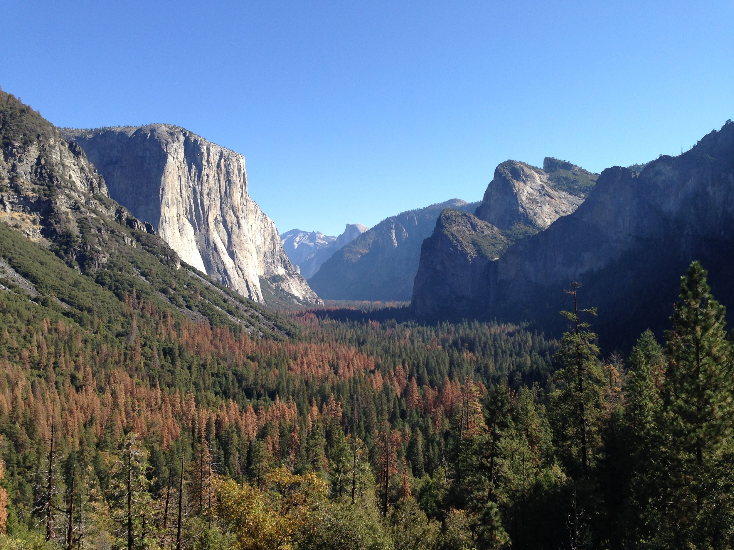 Yosemite Valley - October 2016 - Yosemite Valley again from the Tunnel View. Notice the amount of dead pines from the drought and Pine Bark Beetle.