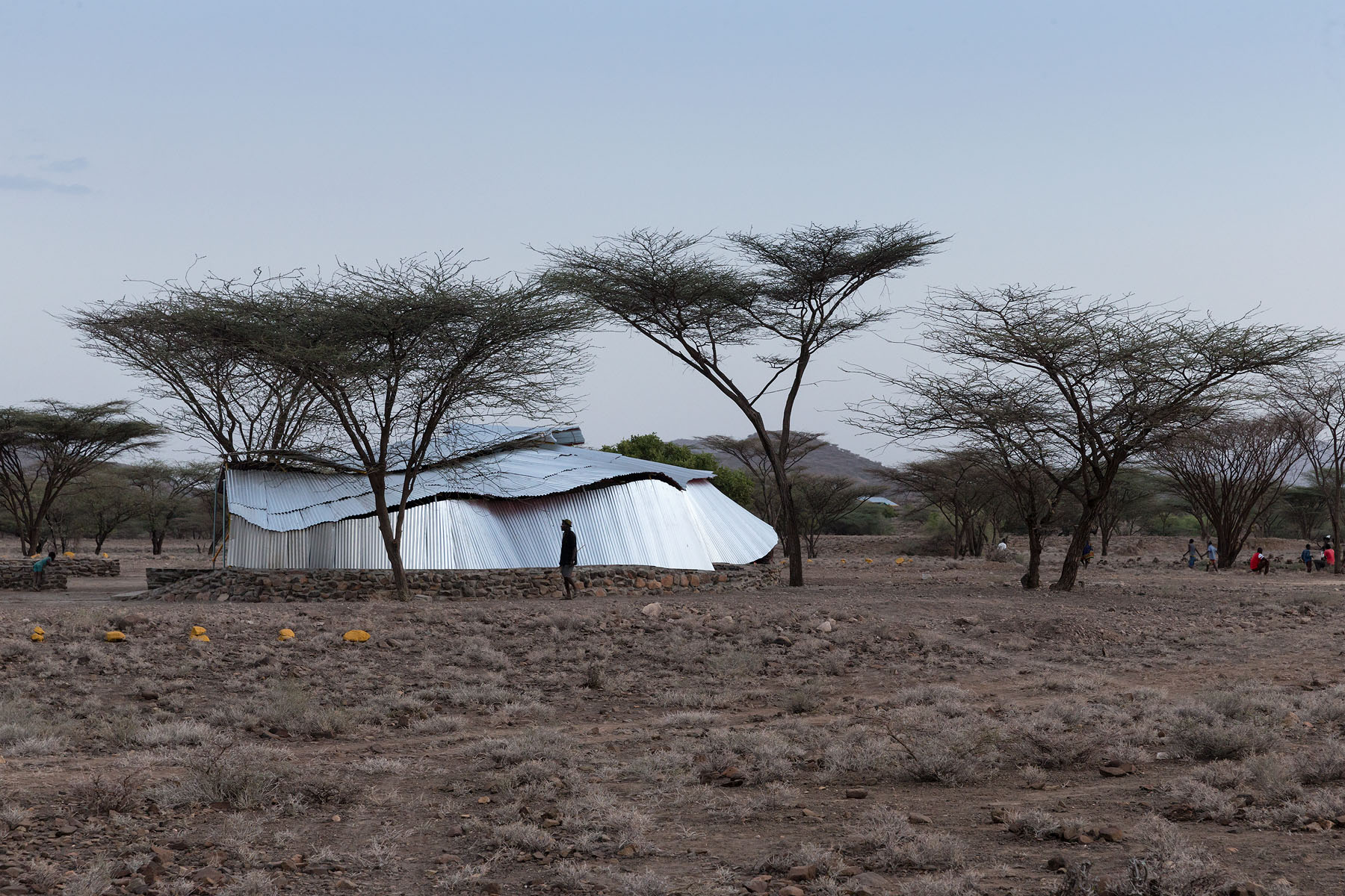 Konokono Turkana SCA 7361.jpg