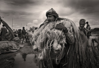 collected: farmers carries raw jute to the market