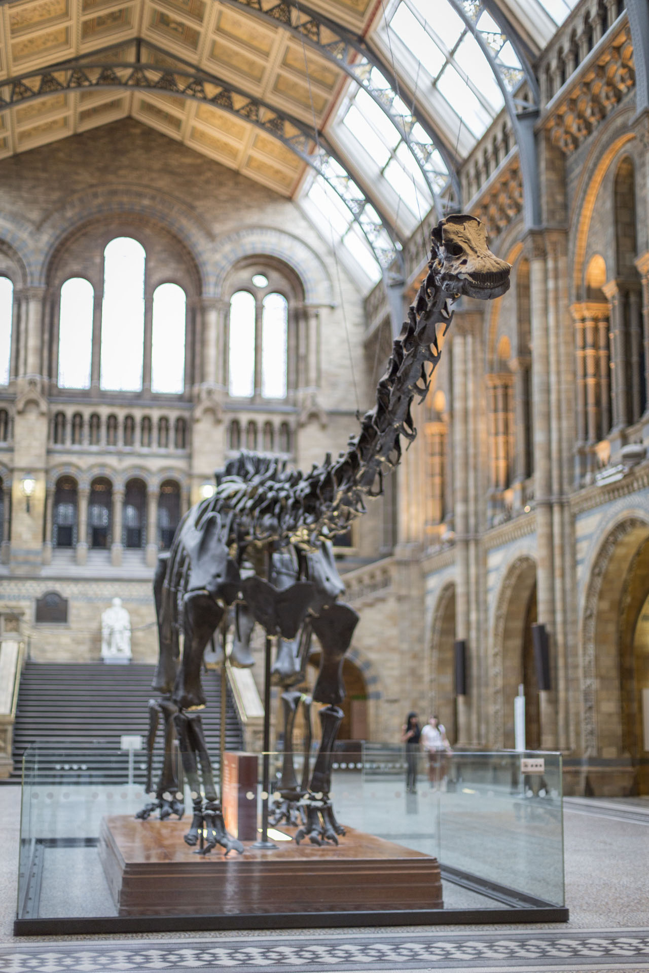 Dippy at Natural History Museum 2 (Copyright NHM).jpg